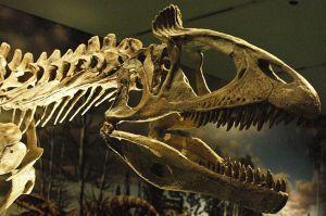 Cryolophosaurus, Royal Ontario Museum. Wikimedia.