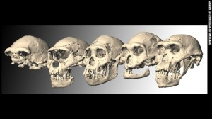 Homo erectus skulls. Courtesy of the University of Zurich