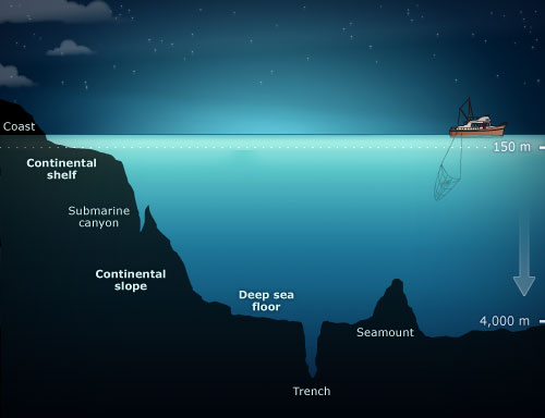 February 2014 paleoaerie for Another word for ocean floor