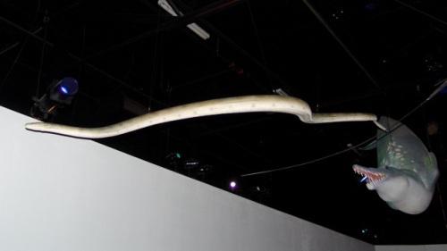 pterosphenusmodel