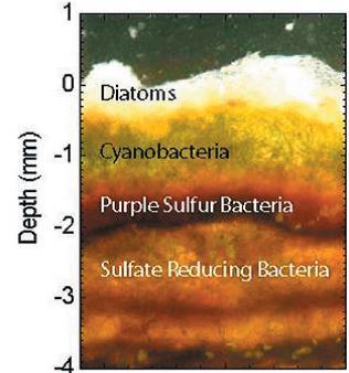 stromatolitezones
