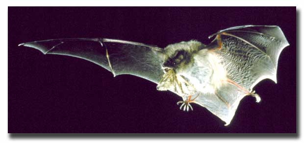 One down, only 33 million more to go this year. http://www.life.illinois.edu/paige/bats.html