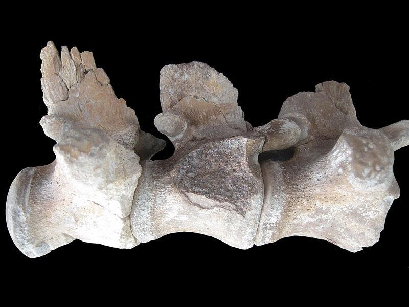elasmosaurus « paleoaerie