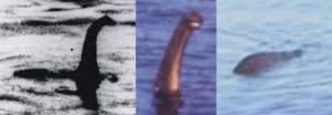 Nessie-montage-Tetrapod-Zoology-600-px-tiny-July-2013