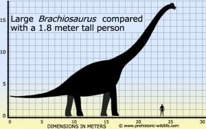 brachiosaurus-size