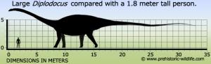 diplodocus-size
