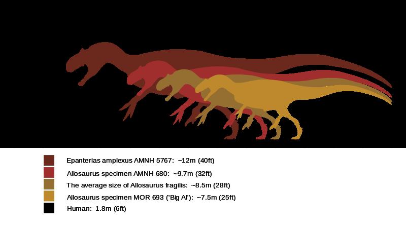 Dinosaur Size Charts Allosaurus_size_comparison-wiki