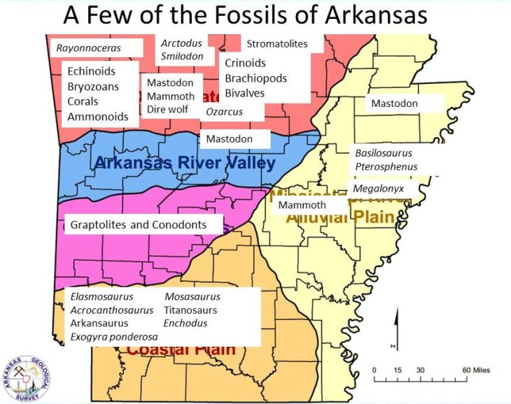 Arkansas Geologicl Survey regional map, annotated with reported fossils.