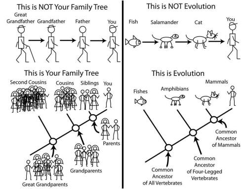 How evolution works. Matt Bonnan.