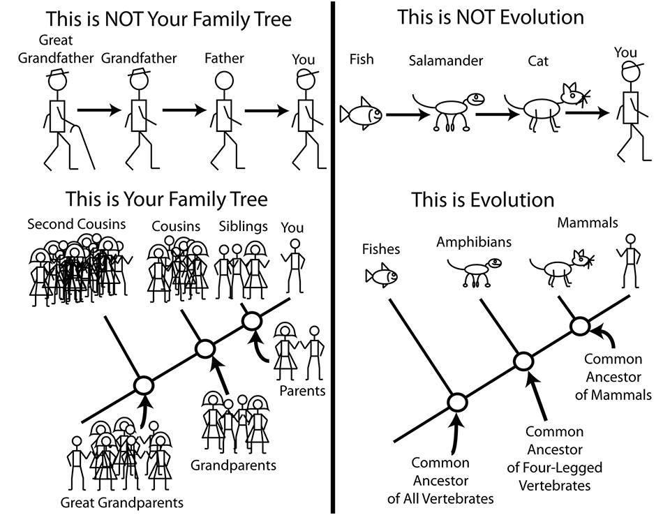 How evolution works. Matt Bonnan.