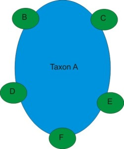 Taxon A is the original generalist species. B-F are new species evolving at the edges of the original range.