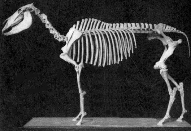 Equus-Scotti-617x422