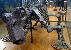Lystrosaurus, Survived the greatest extinction of all time, for a while. Wikimedia.