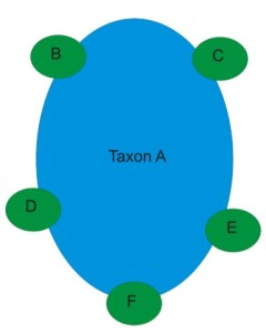 Peripheral isolates. Taxon A is the original species. B-F are new species that evolved from the original species due to adaptation for the particular environments in that area. The original species is usually more of a generalist, able to survive in many environments.