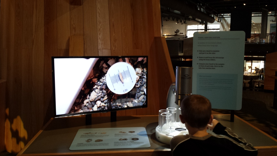 Find a fossil! The TV shows what the person looking through the microscope sees so everyone can see it.