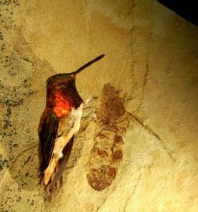 Titanomyrma lubei (not from Arkansas).