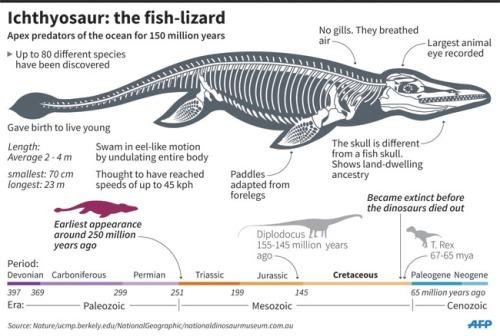 Palaeontology_Ichthysaur