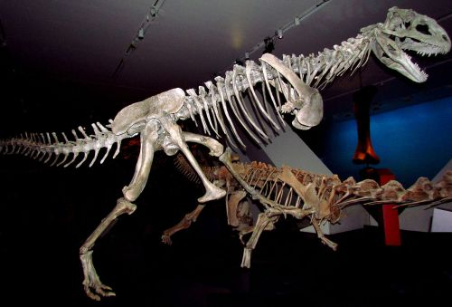 1280px-Majungasaurus_crenatissimus,_ROM
