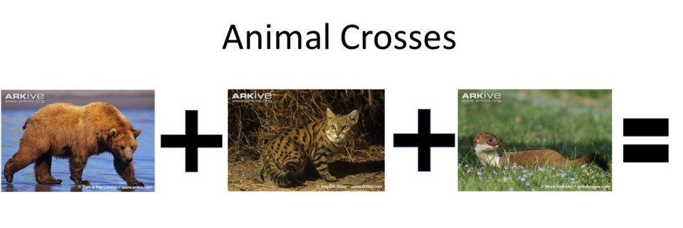 animalcross418