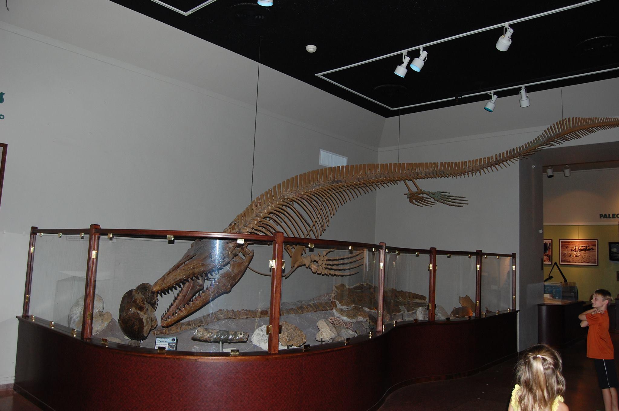 Texas Natural History Museum Ut Austin