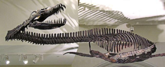 Elasmosaur.jpg