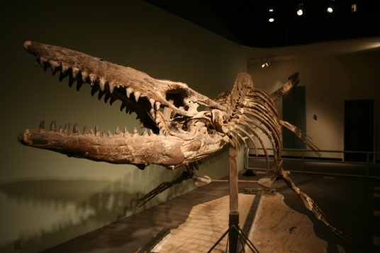 Heath mosasaur, Dallas Museum of Nature and Science