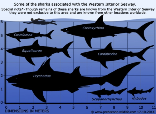 sharks-of-the-western-interior-seaway