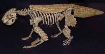 Simosuchus_clarki,_ROM.jpg
