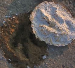 Acrocanthasaurus_61011_earthtimes