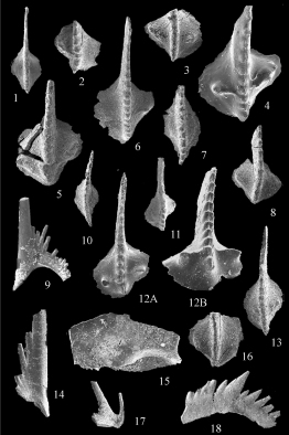 conodontsscriptageologica.jpg