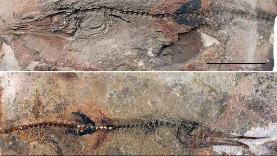 647435-fish-fossil